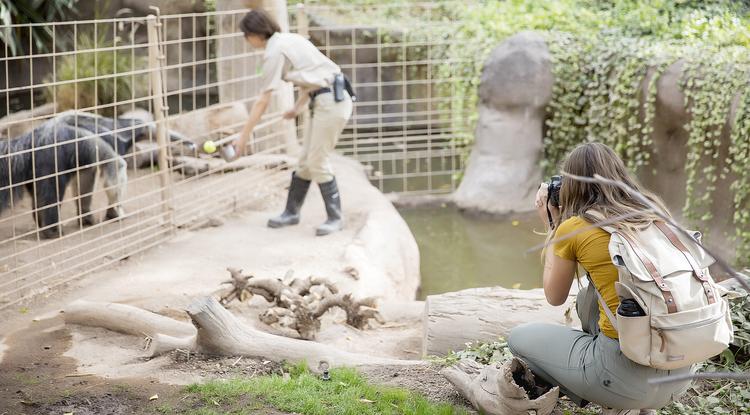 Photo of reid park zoo
