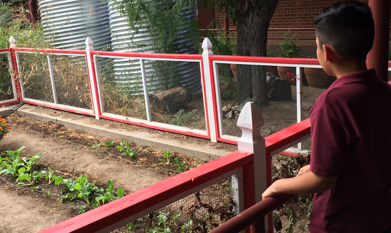 Elementary school student overlooking community garden at Tucson school