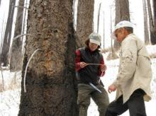 Connie Woodhouse and Mark Losleben examine tree-ring