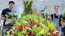 two students in green house with produce